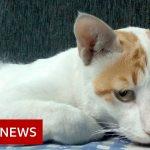 Coronavirus: Treating Delhi's dogs and cats in the pandemic – BBC News